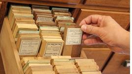 Echantillons de bois de la Xylothèque