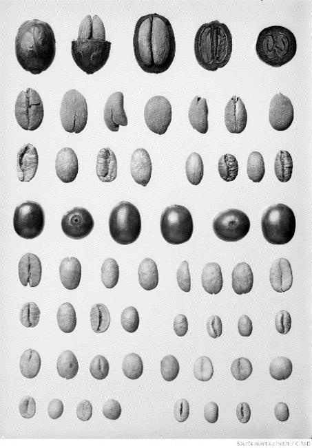 Grains et fèves de café sous différents aspects